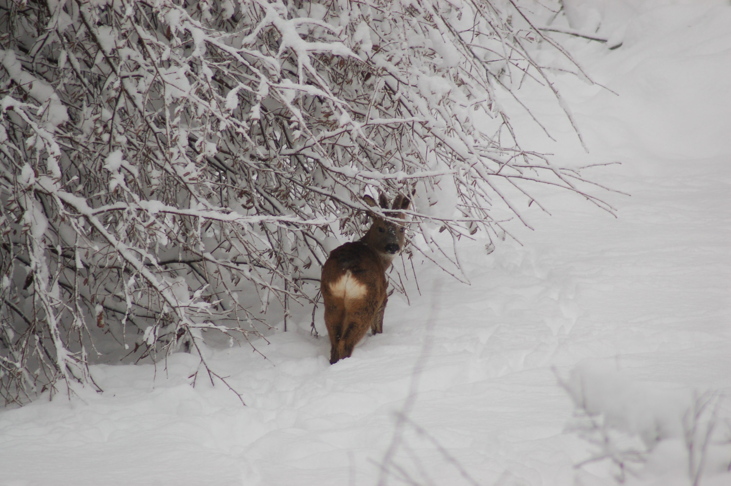 21 Winter ree