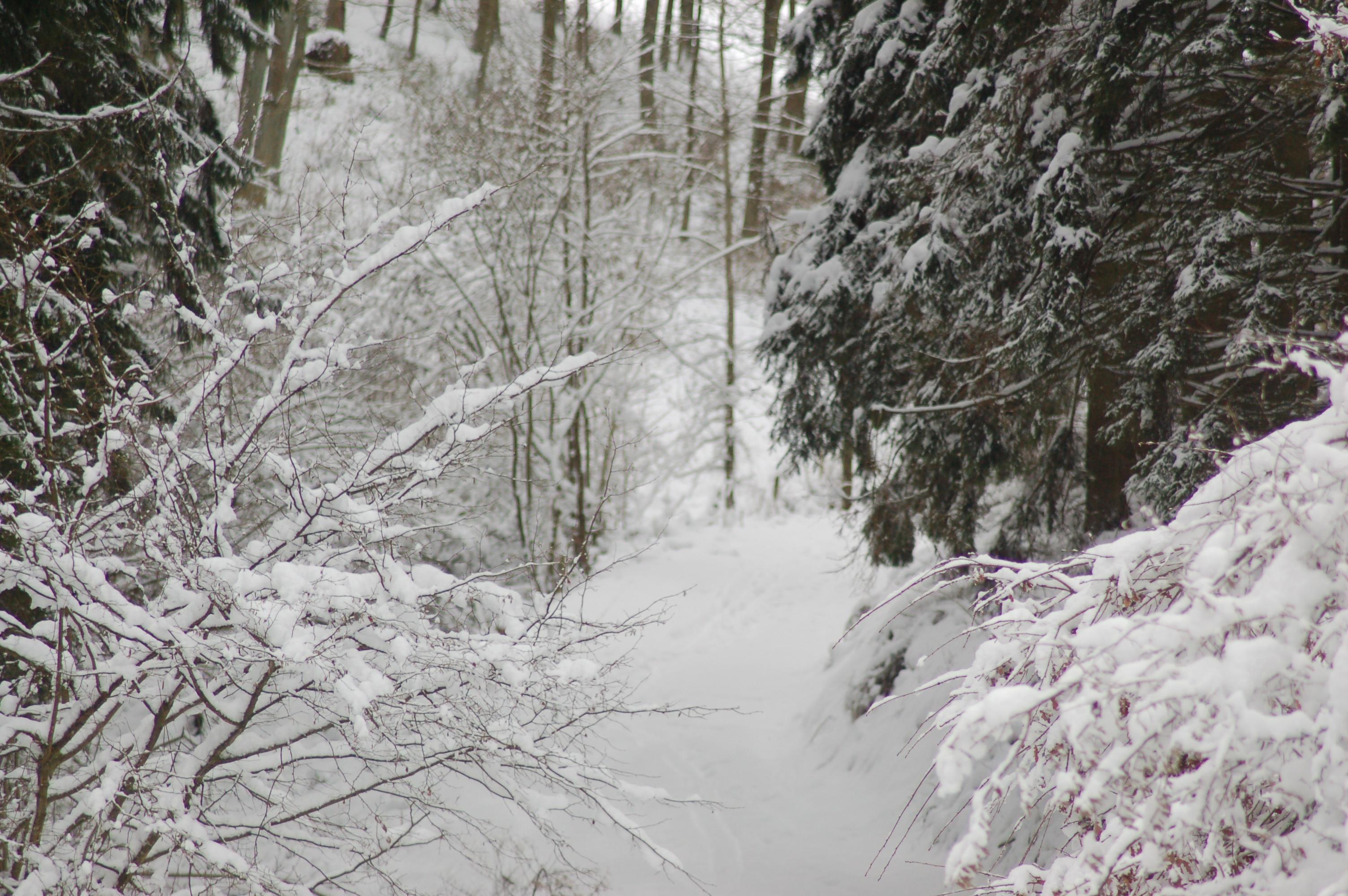 19 Winter bospad