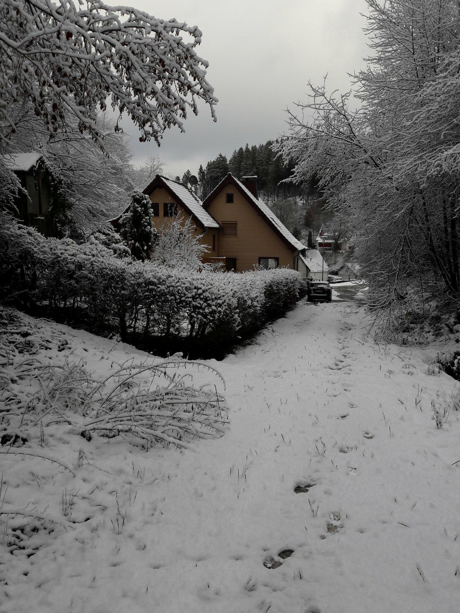 20 Winter bospad