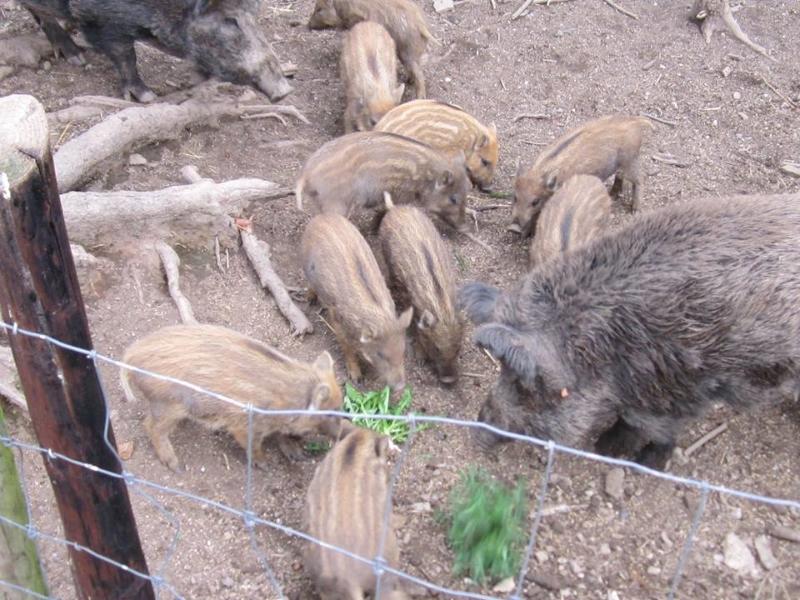27 Greifvogelstation & Wildfreigehege Hellenthal