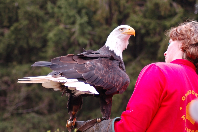 31 Greifvogelstation & Wildfreigehege Hellenthal