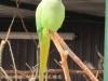 23 Greifvogelstation & Wildfreigehege Hellenthal