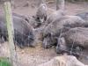 25 Greifvogelstation & Wildfreigehege Hellenthal