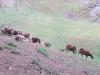 24 Greifvogelstation & Wildfreigehege Hellenthal
