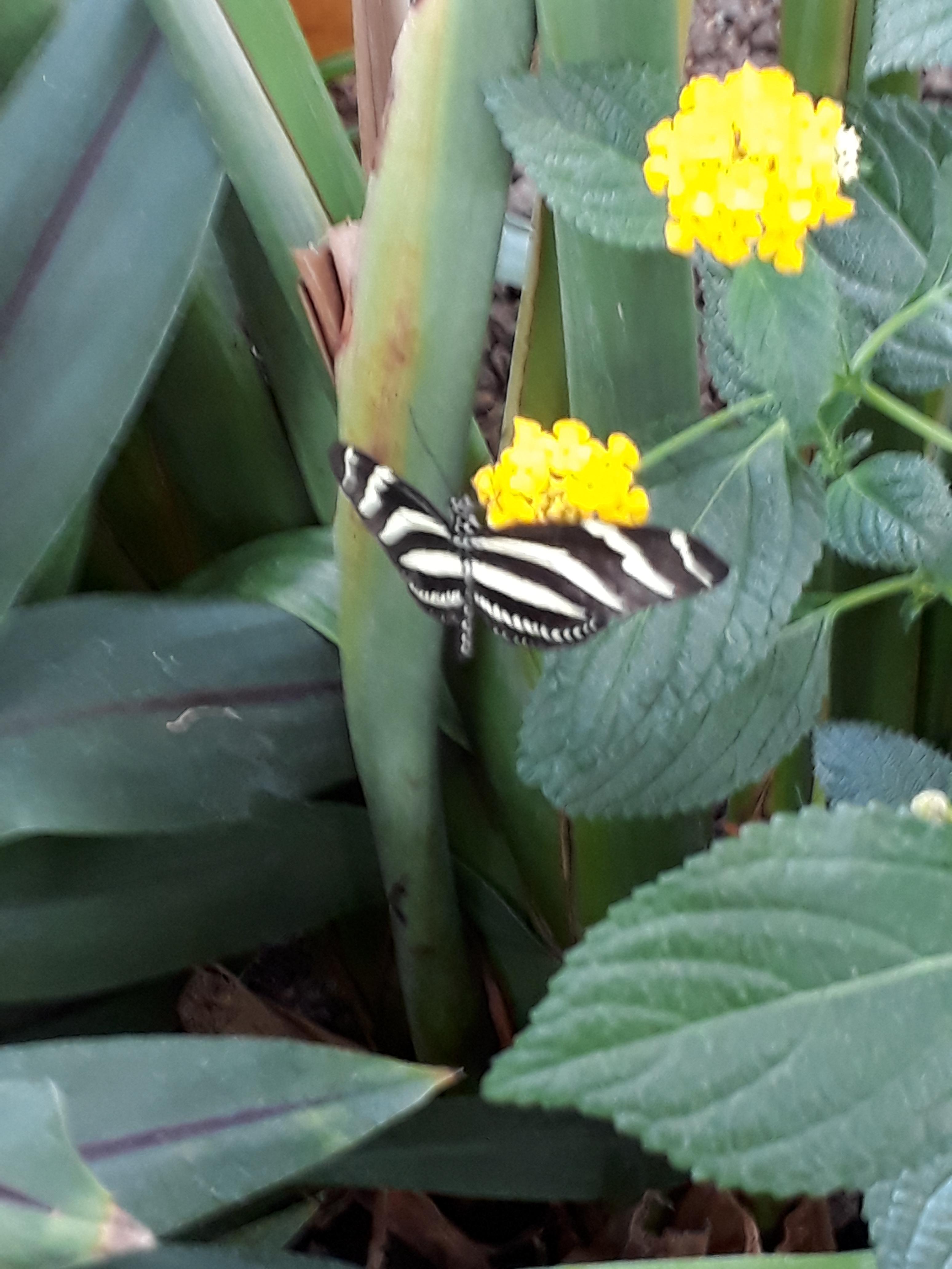 18 Vlindertuin