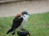 29 Greifvogelstation & Wildfreigehege Hellenthal